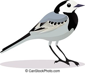 Wagtail bird cartoon vector illustration