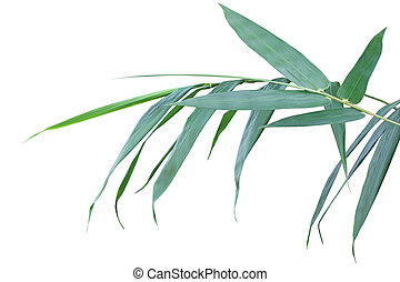 Bamboo Leaf - Fresh Bamboo leaves on branch isolated on...