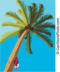 sunny tropical palm tree with bathing suits hanging from its...