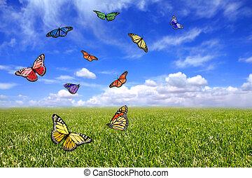 Beautiful Butterflies Flying Free in an Open Field of Grass...