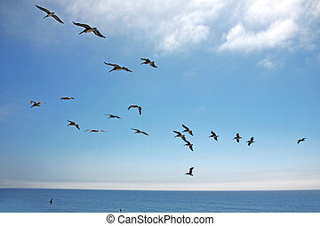 Birds in Formation Across the Sky Over the Ocean - Pelicans...