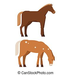 Chestnut Horses in Different Poses - Bay horse standing...