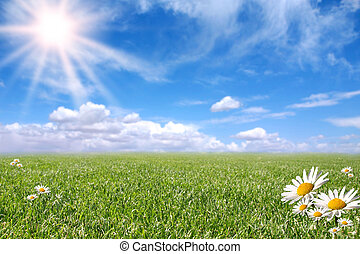 Bright Beautiful Daisy and Grass Field in the Summer Sun