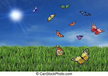 Wild and Free Butterflies in the Afternoon Sun