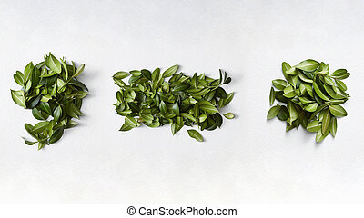 Punctuation marks from green leaves isolated on white...