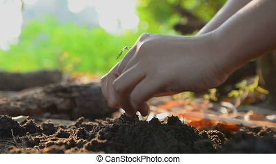 Hands of woman planting the seeds on earth ground and...