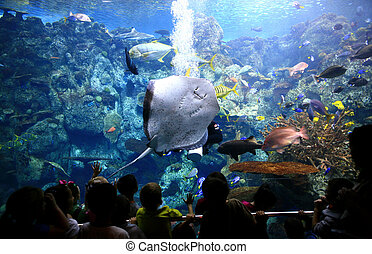 Underwater Image of Ocean Life in an Aquarium - Underwater...