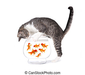 Cat Fishing for Gold Fish in an Aquarium Bowl - Kitten...