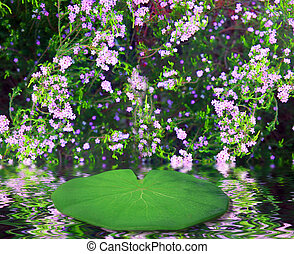 Lilly Pad Fairy Fantasy Background - Lilly Pad Resting in...