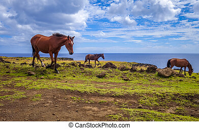 Horses on easter island cliffs, pacific ocean, Chile