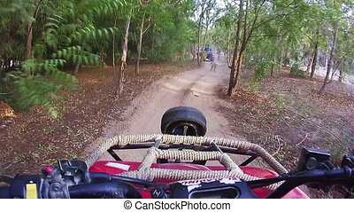 Driving Quad Bike along a Forest Road in Egypt