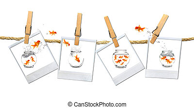 Relocation Dilema - Looking or a Stable Place: Goldfish...