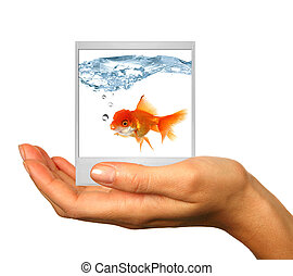 Polaroid Image of a Goldfish