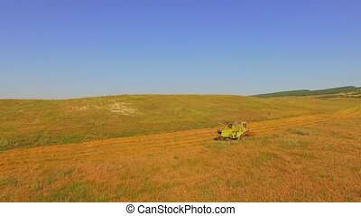 AERIAL VIEW. Rural Combine Harvesting On A Large Wheat Field