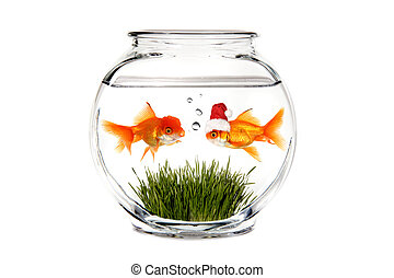 Goldfish Telling Santa What He Wants for Christmas in a Fish...