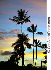 Postcard Perfect Kauai Silhouette Sunset Palms - Colorful...
