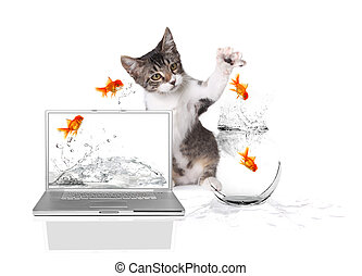 Kitten Pawing at Gold Fish Jumping out of Water - Playful...