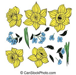 Collection daffodils, spring flowers and leaves. Elements...