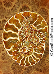 Beautiful Nautilus - Striking Image of a Nautilus in Montage...