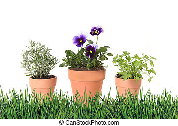 Herb and Foral Spring Time Gardening in Clay Pots