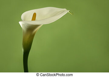 Beautifully Lit Lilly Flower - Creatively Lit Lilly Flower...