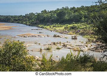 elephant river in kruger national park