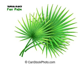 vector illustration of isolated realistic fan palm leaves