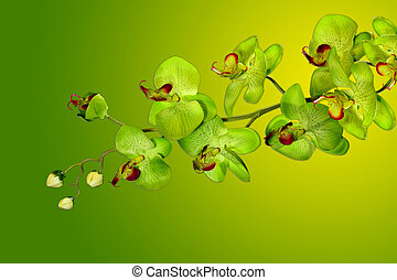 Pretty Green and Yellow Orchids - Green Orchids on Yellow...