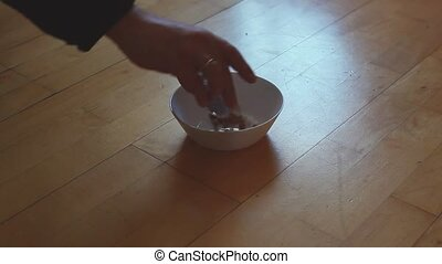 Cat Maine Coon bowl being filled with dry food, cat is...