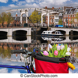 Famous Amsterdam with basket of colorful tulips against...