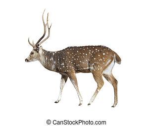 deer on white