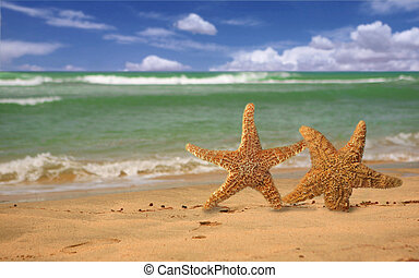 Pair of Starfish Humorously Walking Along the Beach - Pair...