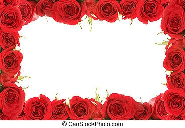 Valentine, o, aniversario, rojo, rosas, encuadrado