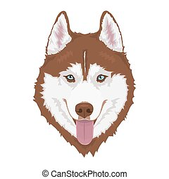 Siberian husky dog - Red Siberian husky with blue eyes and...