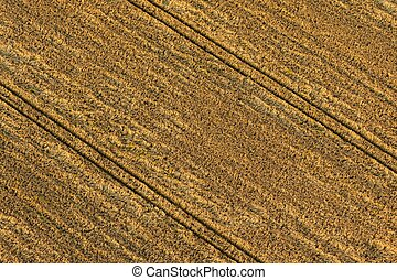 Grain field - Autumn grain field on an aerial photograph