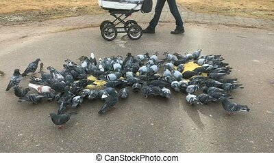 Flock of pigeons eating millet on city street along the...