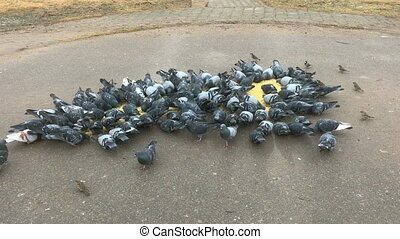 Flock of pigeons eating millet on city street
