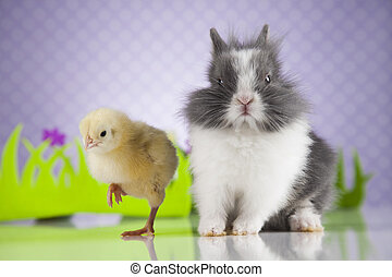 Little chick on rabbit - Happy Easter, Chick in bunny