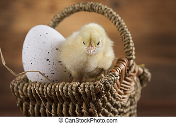Easter young chick, Easter egg - Easter animal