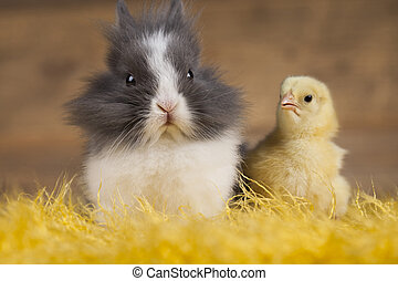 Easter Bunny and Chick - Easter chicken, Bunny