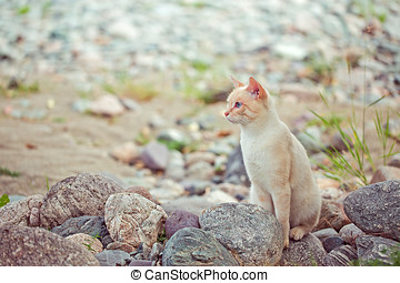 white cat stay in stones near the river on shore - white cat...