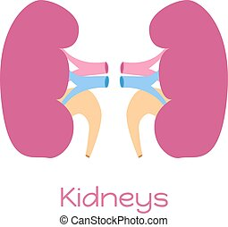 Kidneys illustration in flat style. Viscera icon, internal organ