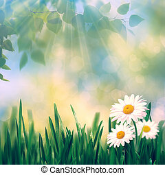 Beauty summer day, abstract rural landscape with blooming flowers and green grass
