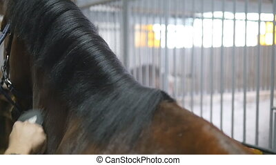 Male hand combing a black or brown horse mane in a stall. Young man combing a fetlock a mane stallion. Care for animals. Horseriding club. Slow mo, slowmotion, closeup, close up.