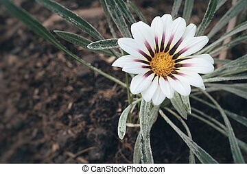 Beautiful daisy flower with nature in garden