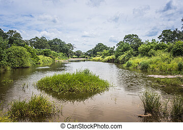 water in safari in kruger national park south africa
