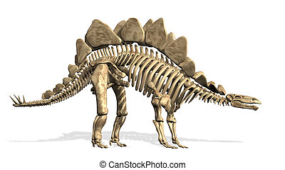 Stegosaurus, 骨骼