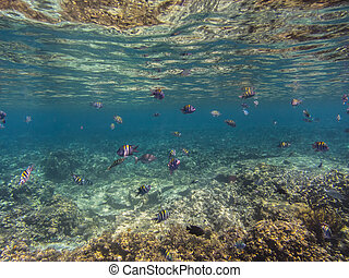 many fish at coral reef in indonesia