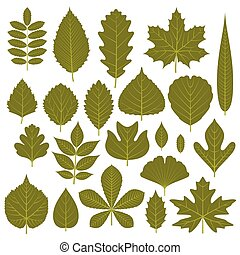 Set of  green leaves from different trees. Vector illustration.