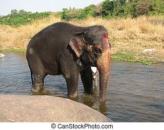 indische, Nehmen, Bad, Fluß, elefant